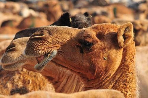 What is the Hajj pilgrimage 9