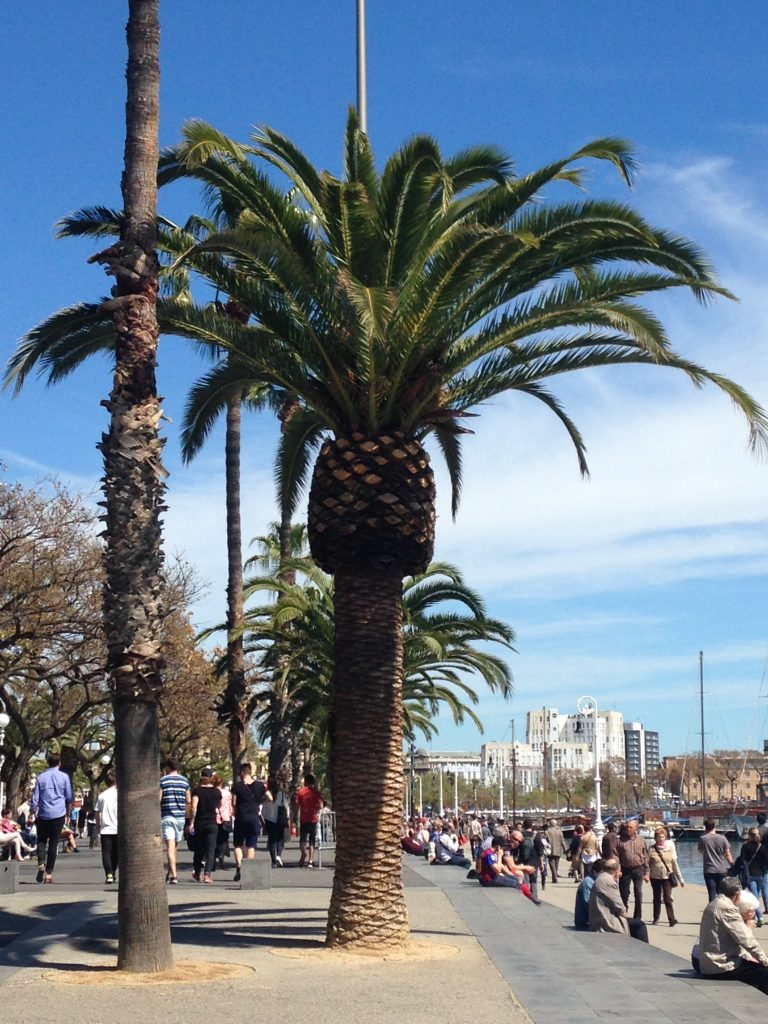 barcelona beach palm tree muslim traveller